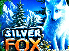 Silver Fox в онлайн клубе Вулкан Удачи